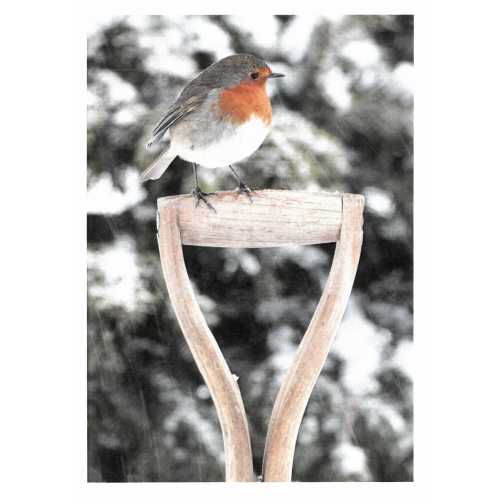 The Yorkshire Robin (Christmas Card) - pack of 5, new